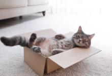 Photo of Gefahren für Katzen im Haushalt: Beispiele und Vorbeugung