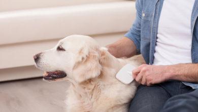 Photo of Hundefell richtig pflegen: Darauf sollte man achten