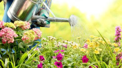 Photo of Garten richtig gießen: Was Hobbygärtner häufig falsch machen