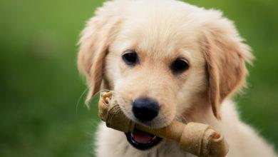 Photo of Kauknochen für Hunde: Zahnpflege und Kauspaß