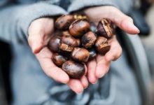 Photo of Maronen einfrieren: Tipps und Tricks zum haltbar machen