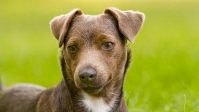 Photo of Patterdale Terrier: Ein gutmütiges Energiebündel